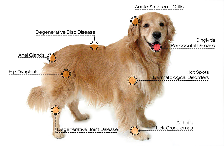 Laser Therapy for Dogs