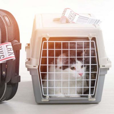 Tips on Traveling with your Pet