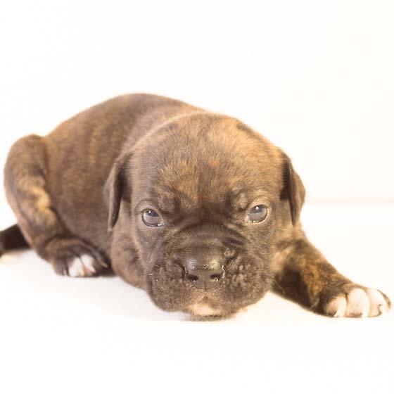 Pet Insurance Dog Image