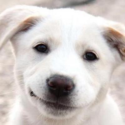 Smiling Dog Face